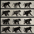 Eadweard Muybridge. Prima del cinema