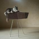 Fuorisalone 2017 - Brandodesign. Pet Home Collection