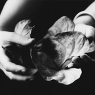 Walter Chappell. Eternal Impermanence