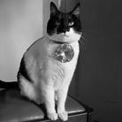 Monsieur Baptiste in The Big Kitty, Un film di Lisa Barmby e Tom Alberts, 70 min, Australia 2019 | Courtesy Tom Alberts & Lisa Barmby | Courtesy Tom Alberts & Lisa Barmby