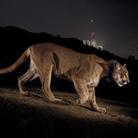 Steve Winter. Big Cats