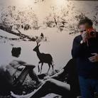Maurizio Galimberti. Forest Frame. La foresta tra sogno e realtà