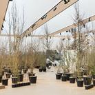 Foresta M9. Un paesaggio di idee, comunità e futuro