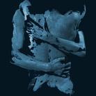 BODYSPACES | HUMANS+HYBRIDS