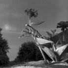 Larry Fink, Mantis, September 1978   Unbridled Curiosity   © Larry Fink