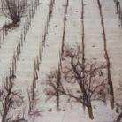 Bongiovanni Radice. Una pittura borghese