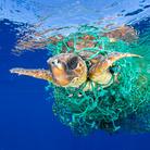 Nature - First Prize, Singles © Francis Pérez, Caretta Caretta Trapped, Una tartaruga marina caretta caretta nuota impigliata in una rete da pesca abbandonata di fronte alla costa di Tenerife, Isole Canarie