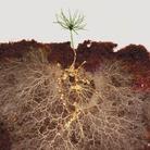 HyperSoil. Organismi del Suolo - Complessità - Agricolture - Futuro