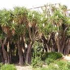 Parco Culturale del Gattopardo (Giuseppe Tomasi di Lampedusa)