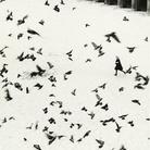Virgilio Carnisio. Milano 1961-1971 / Me Museo. Le fotografie del cuore