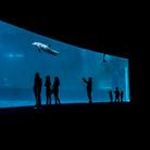 Acquario di Genova, il più grande d'Italia e tra i più grandi d'Europa | Foto: Goran Bogicevic / Shutterstock.com - Genova
