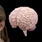 """Nella scatola magica del cervello: Fondazione Prada presenta """"Human Brains"""""""