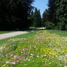 Parco delle Terme di Levico (Levico terme - TN), Nuovo ingresso nella rete Grandi Giardini Italiani 2017 | Courtesy of Archivio Grandi Giardini Italiani, www.grandigiardini.it