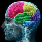 Brain. Il cervello istruzioni per l'uso
