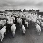 LISETTA CARMI. Voci allegre nel buio. Fotografie in Sardegna 1962 - 1976