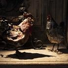 Toni Zuccheri. Di galli e galline, upupe, civette e altri animali