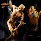 Real Bodies. Scopri il corpo umano