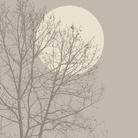Brilliant Trees: la mostra che suona