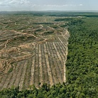 Edward Burtynsky, Clearcut #1, Palm Oil Plantation, Borneo, Malaysia, 2016 | Foto © Edward Burtynsky | Courtesy of © Admira Photography, Milan / Nicholas Metivier Gallery, Toronto