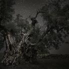 Arborea. I monumenti vegetali di Federica Galli e Beth Moon