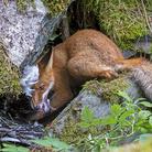 Fine estate in Val d'Aosta con gli scatti premiati al Wildlife Photographer of the Year