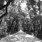 Bosco di Capodimonte. Un grande progetto di valorizzazione
