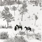 Fulvio Roiter, Norcia, Umbria, Terra di San Francesco, Dettaglio, 1955 | © Fondazione Fulvio Roiter