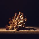 Mauro Davoli, Funghi con insetto, 2003, 120 x 80 cm | © Mauro Davoli