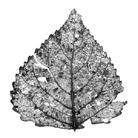 AiR (Arte in Riserva) - Ecosofia. Una visione sistemica tra arte e natura
