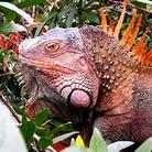 Viaggio nella Natura del Costa Rica: foto, disegni e diari da un'avventura