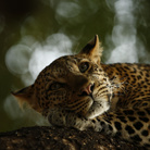 Alla Fondazione Matalon Wildlife Photographer of the year: la natura inesplorata in 100 scatti