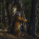 Wildlife Photographer of the Year n. 56