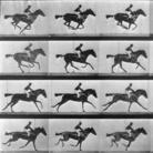 Muybridge e il sogno di far volare i cavalli
