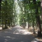 Parco delle Cascine - Firenze