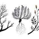 Plantae. Un'indagine tra Arte e Scienza sulle piante, l'adattamento e la mitigazione ai Cambiamenti Climatici