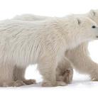 WPA - Wildlife Photo & Art 2016
