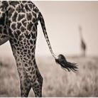 Wildlife photographer of the year: la natura dà spettacolo e si fa arte