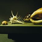 Mauro Davoli, Conchiglie, 2001, 120 x 80 cm | © Mauro Davoli