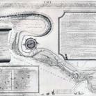 Storia dell'antico percorso del canale dei molini a grano di Cesena