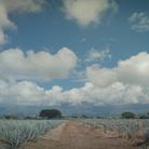 Un'immagine da The Arch., Messico | Regia di Alessandra Stefani | Courtesy Scarabeo Entertainment / Adler Entertainment