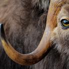 Riapertura della Galleria dei mammiferi del Museo di Storia Naturale dell'Università di Pisa