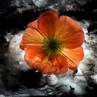 Mario Carrieri. Amata bellezza. Fiori e Visioni. Fotografie