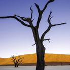 La Terra dopo di noi di Telmo Pievani - Presentazione