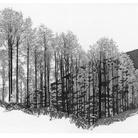 Attraverso l'Albero: Storie di Radici