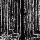 Mario Giacomelli, Presa di coscienza sulla natura, 390x285 mm | Courtesy of Studio Guastalla Arte Moderna e Contemporanea / The Lone T art space | Foto: Cristian Castelnuovo