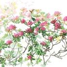 Herbarium vagans