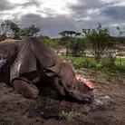 Wildlife Photographer of the Year. 53esima edizione