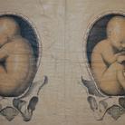 Venire alla luce. Dal concepimento alla nascita