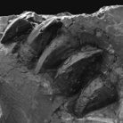 Il Mosasaurus di Novafeltria al Museo Geologico Giovanni Capellini di Bologna