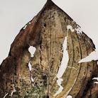 Nino Migliori, Herbarium, 1974, C-print vintage-unicum su supporto legno, 70 x 100 cm   © Fondazione Nino Migliori